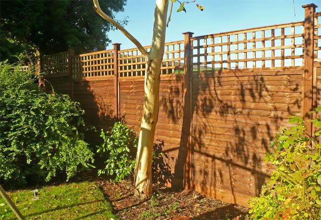 waney trellis fencing
